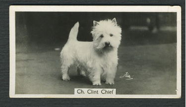 clint_chief