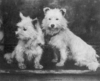 Sky Terriers